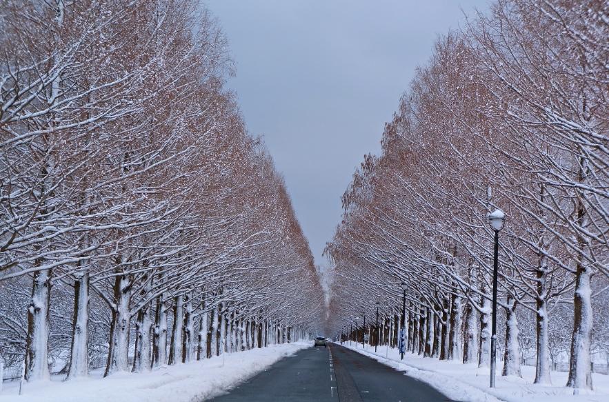 雪道ドライブ〜マキノ高原と琵琶湖周辺の冬景色